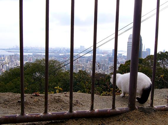 展望台と猫